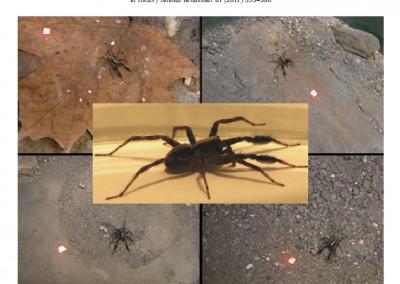 Gordon SD, Uetz GW.  2011.  Multimodal communication of wolf spiders on different substrates:  evidence for behavioral flexibility.  Animal Behaviour.  81:367-375.