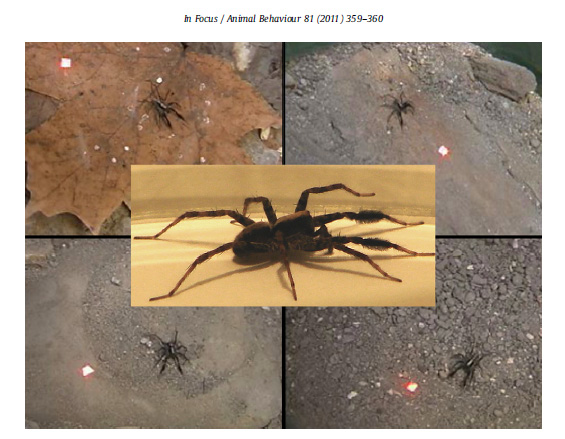 Gordon SD, Uetz GW.  2011.  Multimodal communication of wolf spiders on different substrates:  evidence for behavioral flexibility.  Animal Behaviour.  81:367-375.