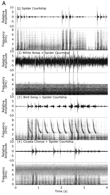 Gordon SD, Uetz GW.  2012.  Environmental interference: impact of acoustic noise on seismic communication and mating success.  Behavioral Ecology. 23:700-714.