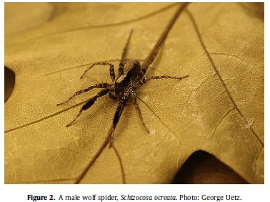 Lohrey AK, Clark DL, Gordon SD, Uetz GW.  2009.  Anti-predator responses of wolf spiders (Araneae:  Lycosidae) to sensory cues representing an avian predator.  Animal Behaviour.  77:813-821.